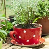 Tea For Your Garden